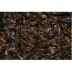 FMR Dried Crickets