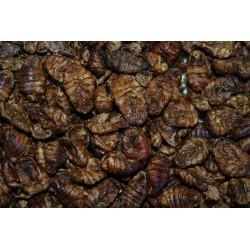 FMR Dried Premium Silkworm Pupae