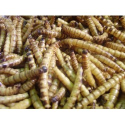 FMR Dried Superworms