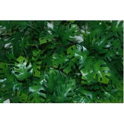 Amazonian Phyllo Plants