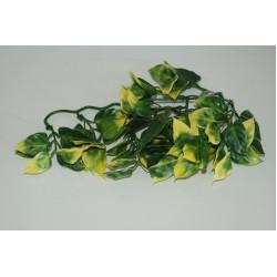 Amapallo Plants