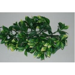 Mandarin Plants