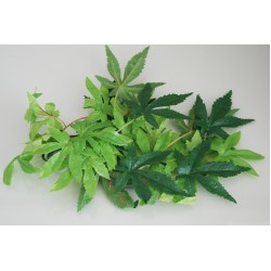 Silk Abulition Plants