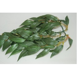 Silk Ruscus Plants
