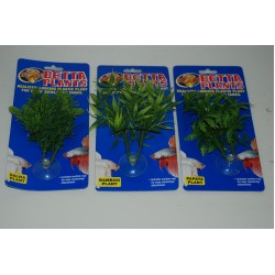 Small Betta Plants
